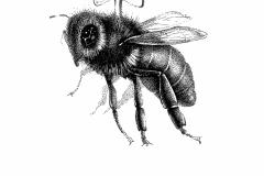 3.-bee-Vichi
