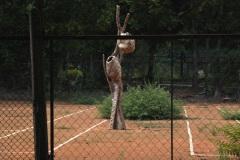"""""""Дърво"""", зебло дърво, 260/80/80 см., 2017 г."""