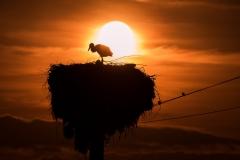 """""""Sunset stork"""""""